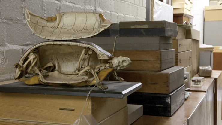 Photo of the bristol museum natural history store