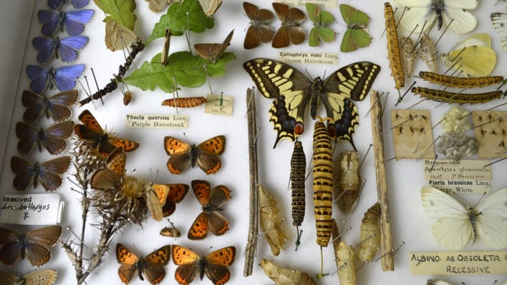 Lunchtime talk: Virginia Woolf's fascination with insect life
