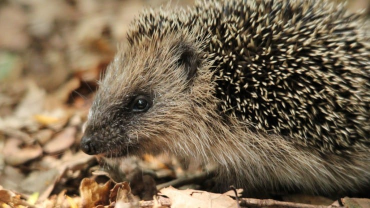 Autumnal Animals: Family Discovery Day