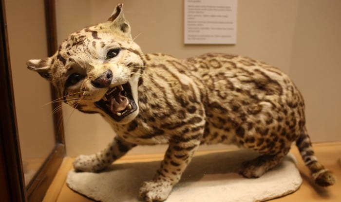 Winter Lecture: Spectacular Dead Taxidermy