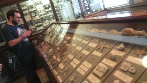 Geology volunteer Charlie Navarro visiting the W.P.Sladen collection of HMS Challenger material on display at the Royal Albert Memorial Museum in Exeter.