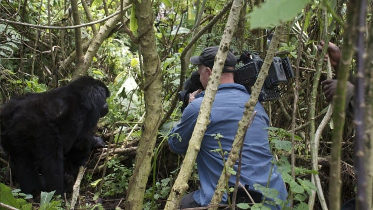Winter Lecture: Shooting Gorillas - how we see the greatest of apes