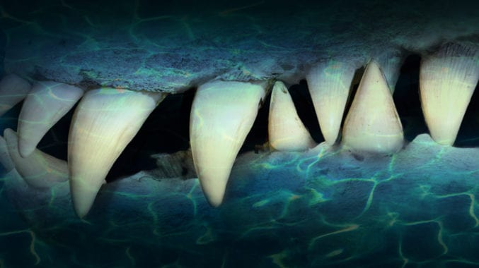 A close up of a pliosaur's mouth showing huge pointed teeth underwater