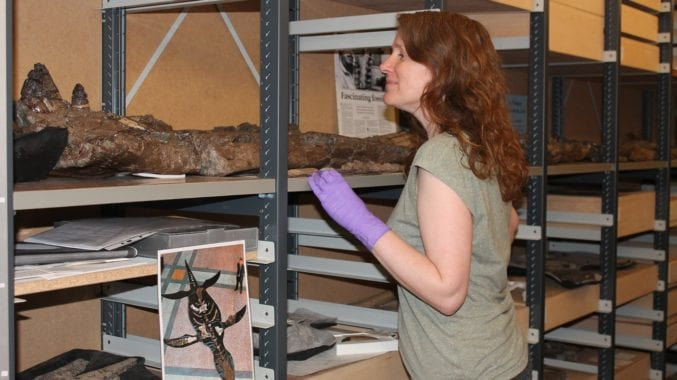 A lot of pliosaur: All these boxes and shelf space is needed to store just this one specimen of pliosaur - BRSMG Cd6172