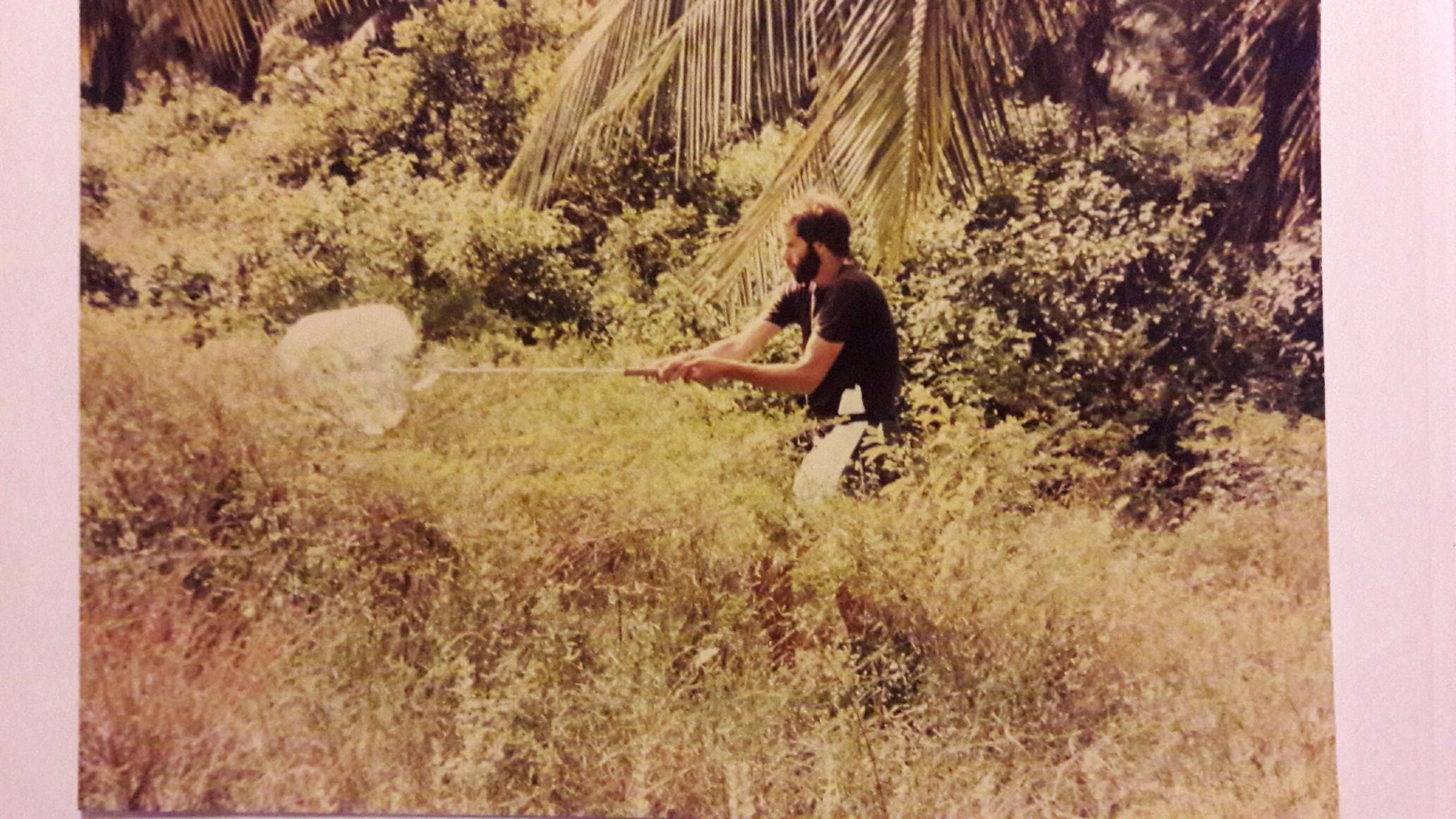 Image showing Ray collecting insects for the Natural History Museum.