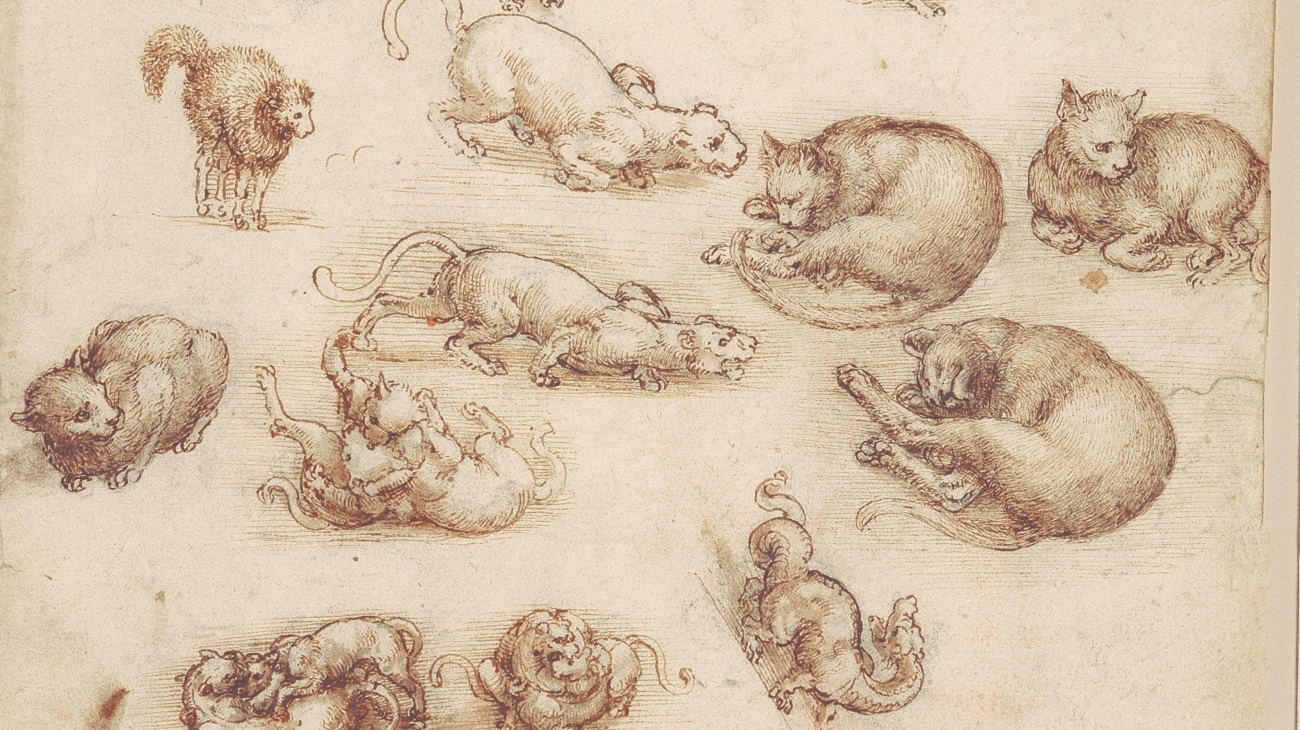Leonardo da Vinci - Lions, cats and dragon drawing