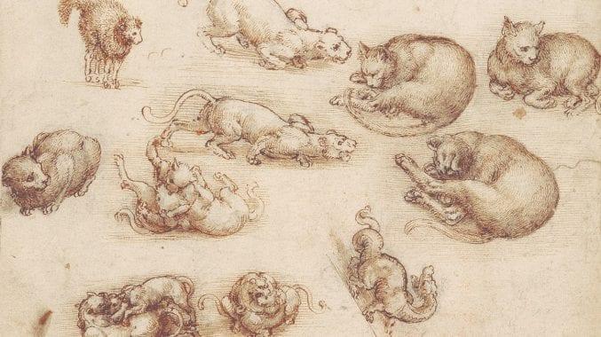 A Leonardo da Vinci drawing of lions, cats and dragons