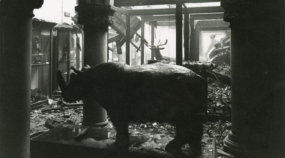 taxidermied rhino standing in a bomb-damaged bristol museum