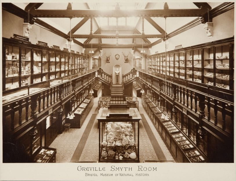 sepia-tinted photo og a large room with natural history displays, taken from a high viewpoint. in the foreground there is a case with a variety of large shells in it