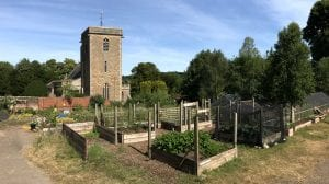 A view of the Blaise community garden, showing raised beds with vegetables growing in the foreground and a church in the background