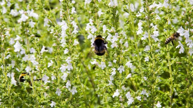 Winter Lecture: Saving bumblebees