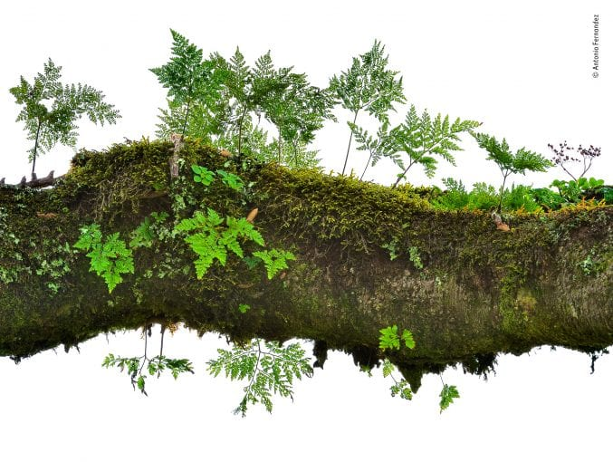 A tree branch covered in moss and ferns