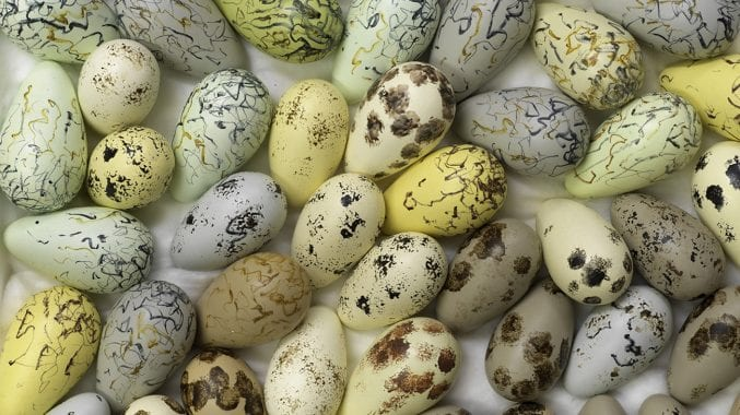 a view from above of lots of different coloured eggs, with varying patterns on them
