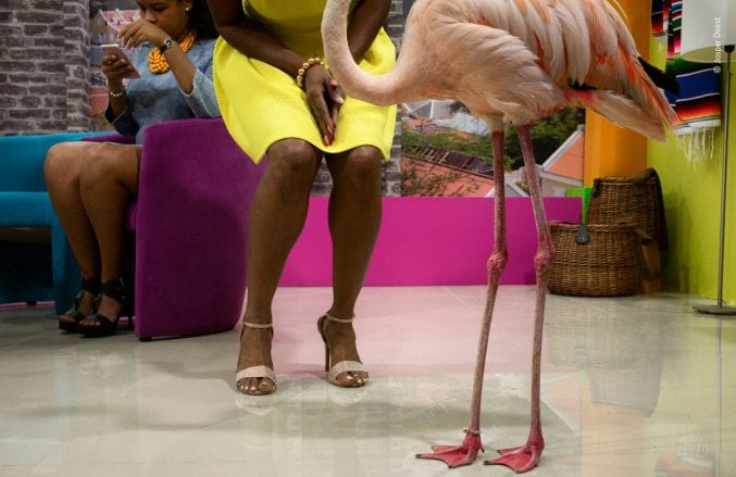 A shot of a flamingo's legs next to the legs of a woman in a yellow dress. In the background, another woman is sat down looking at her phone.