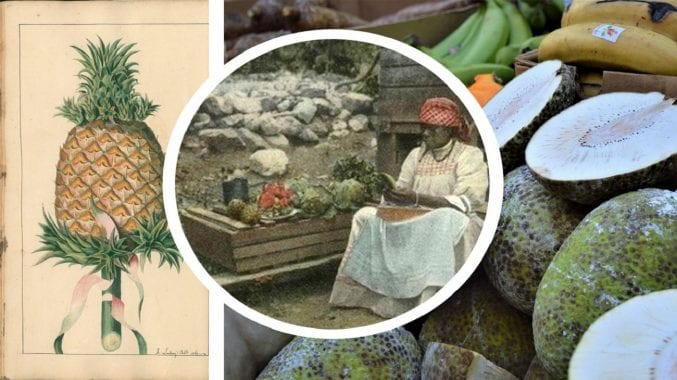 Photograph of a pineapple on the left and several breadfruit, whole and cut, on the right. In the centre is an insert photo of a woman sat peeling a breadfruit.
