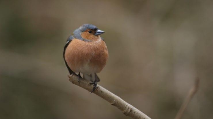 Avian conservation: An evening at Bristol Museum