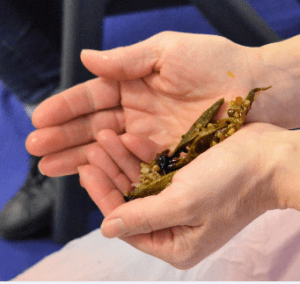 Cupped hands holding green leaf and seeds