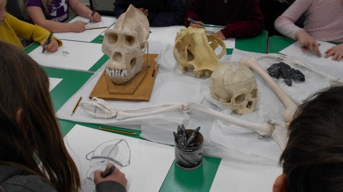 Home Educating Families sat round a table sketching animal and human skulls