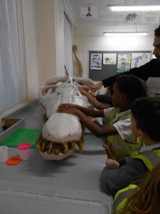 Photograph of a group of school children with an adult touching a dinosaur's skull