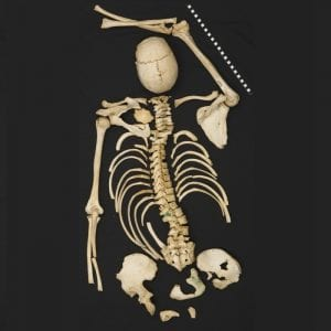 The bones of a skeleton laid out against a black background