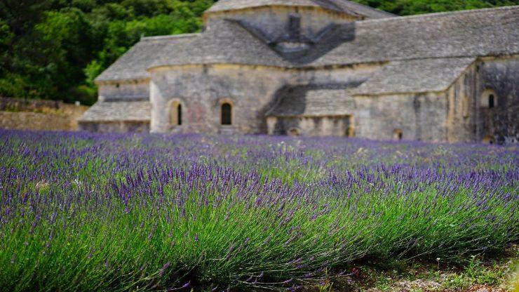 Archaeology café: The mystical medieval herb garden