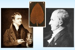 Photographs of Humphrey Davy and Thomas Wedgwood. Between their photos is an image of a brown leaf